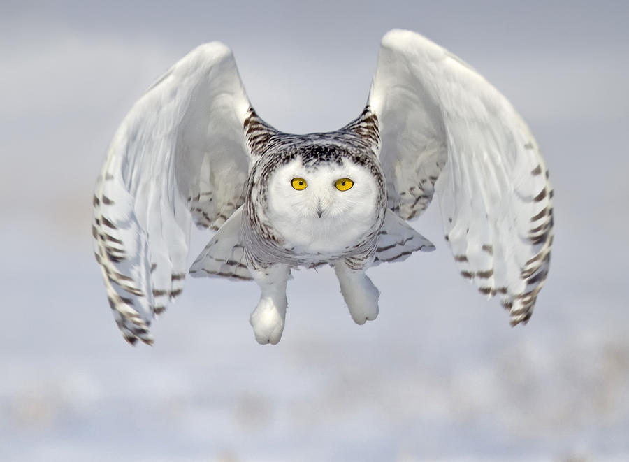 Owl Photograph - Look Out by Peter Stahl