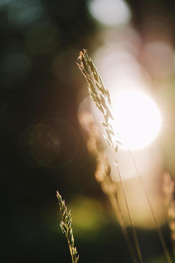 Look Through The Grass by Bob Orsillo