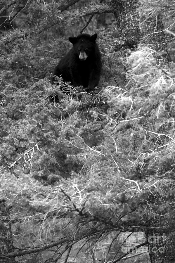 Looking Down At The Family Below Black And White by Adam Jewell