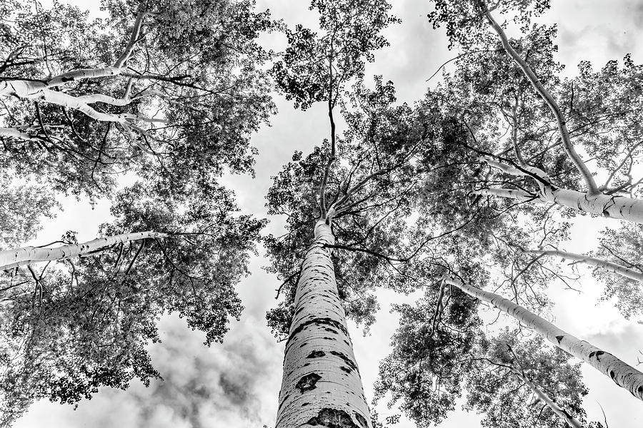 Looking Up by Brian Johnson