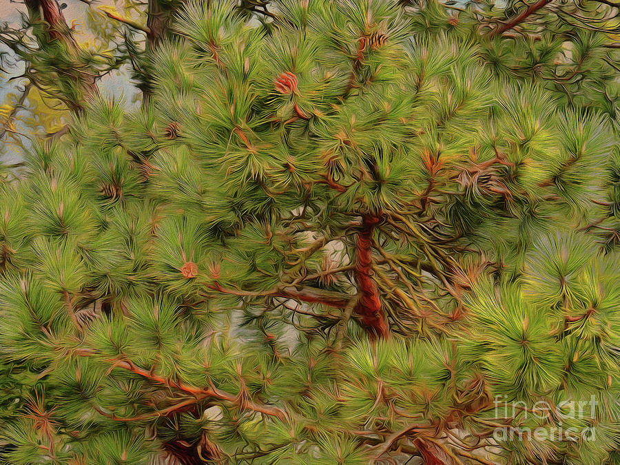 Pine Trees Photograph - Looking Up by Leigh Kemp