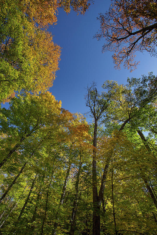 Looking Up - Minden - Ontario, Canada by Spencer Bush