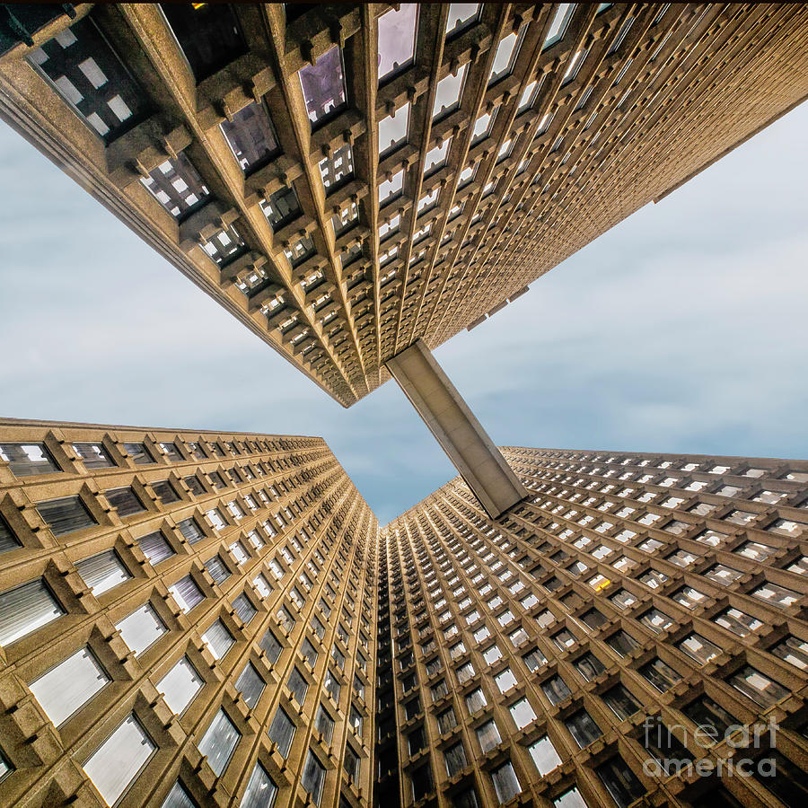 Looking Up by Nick Zelinsky