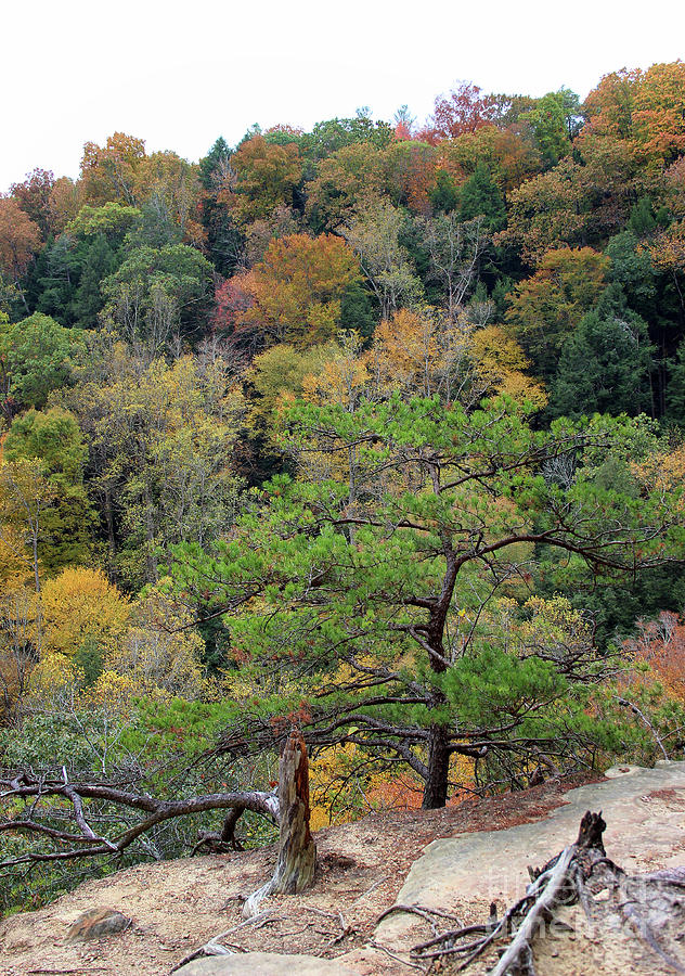Lookout at Hocking Hills by Karen Adams