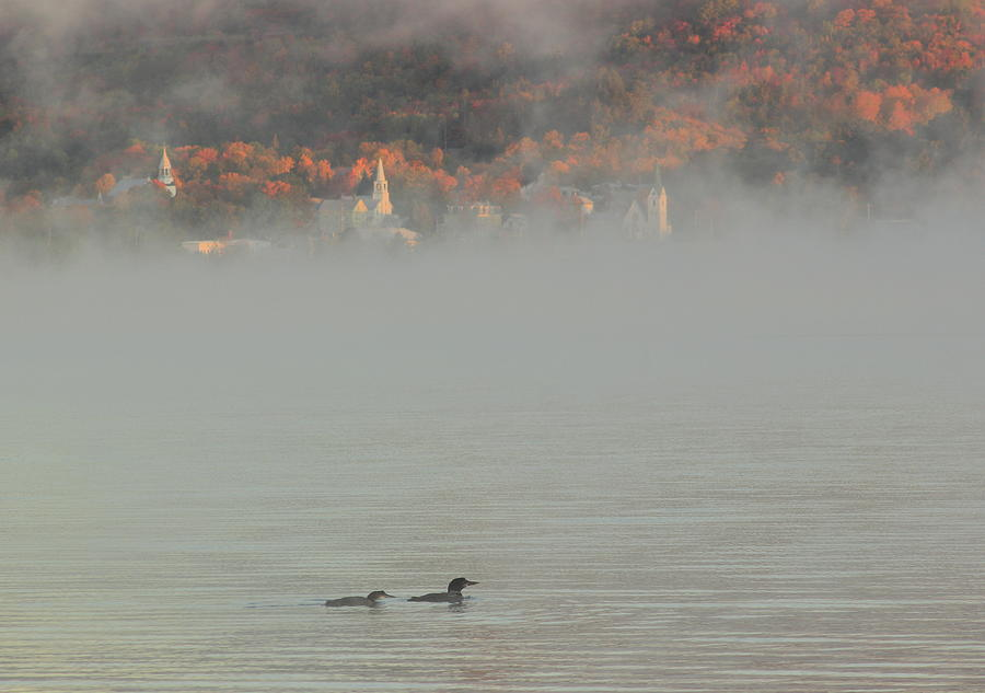 Loons in the Fog at Island Pond by John Burk