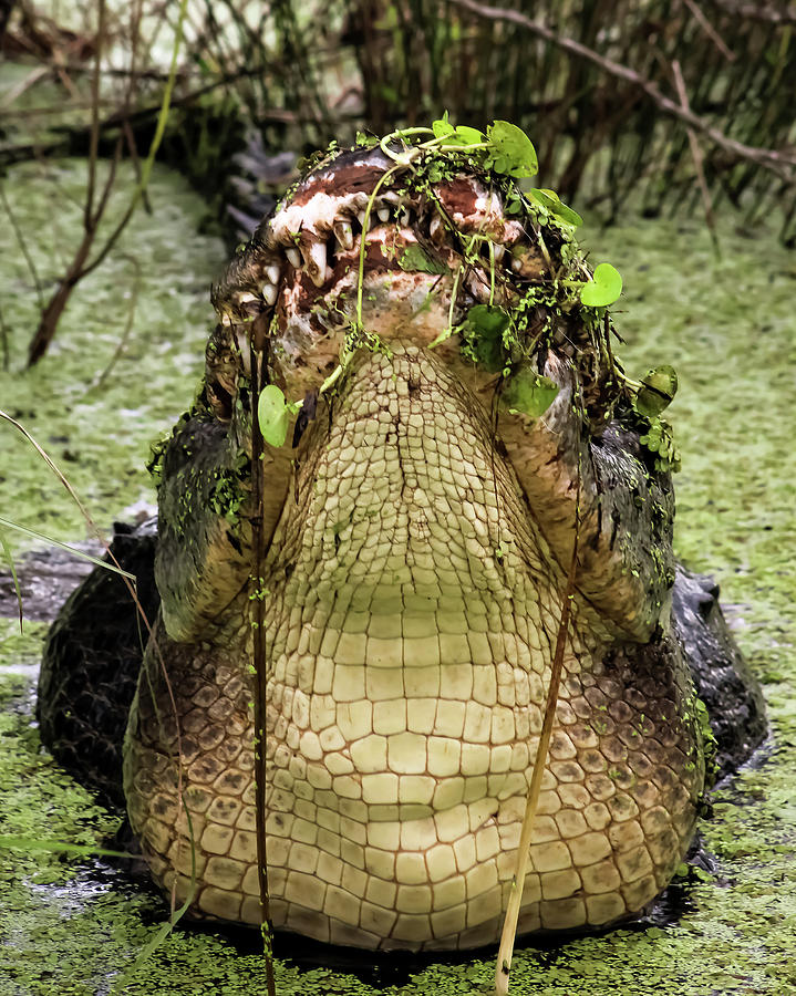 Lord of the Swamp by Michael Allard