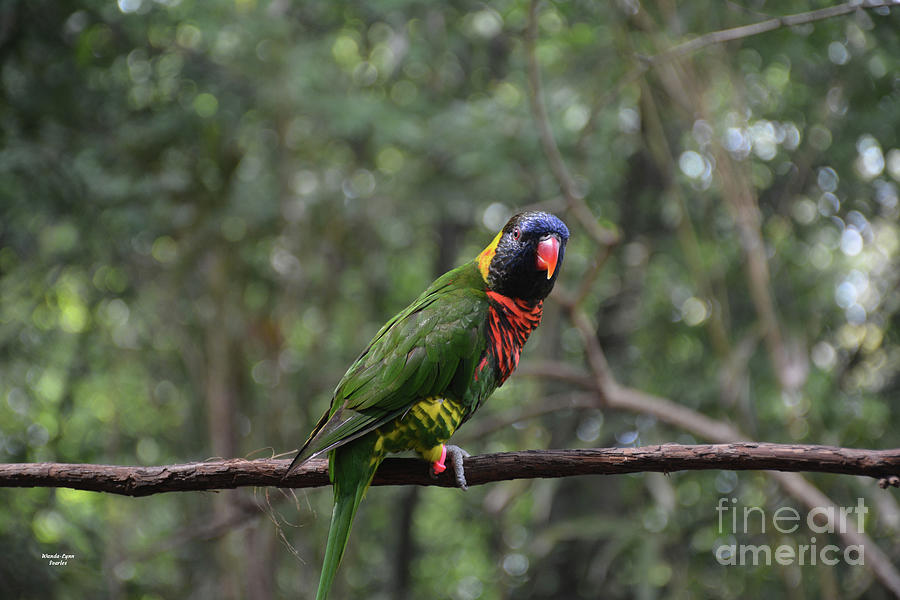 Lorikeet on a Branch by Wanda-Lynn Searles