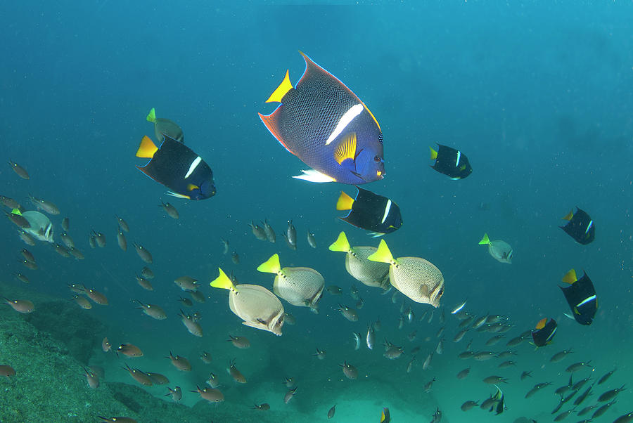 Los Cabos Reefs Photograph by Luis Javier Sandoval