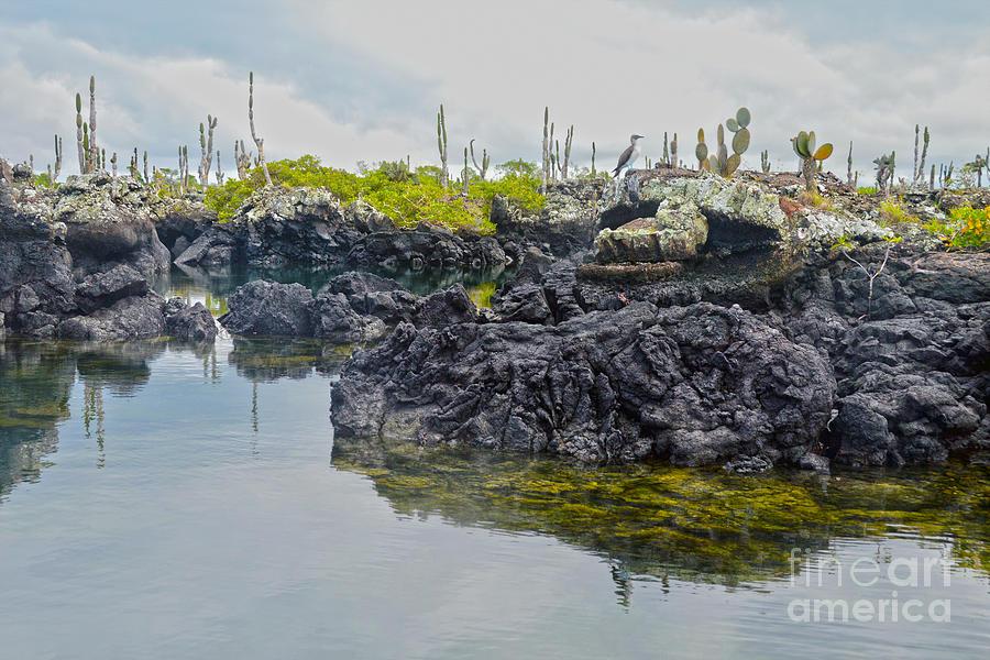 Los Tuneles, Galapagos Islands, Ecuador by Catherine Sherman