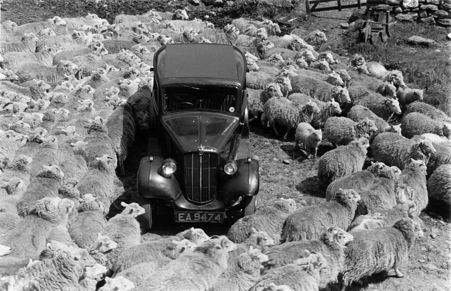 Lost In Sheep Photograph by Grace Robertson