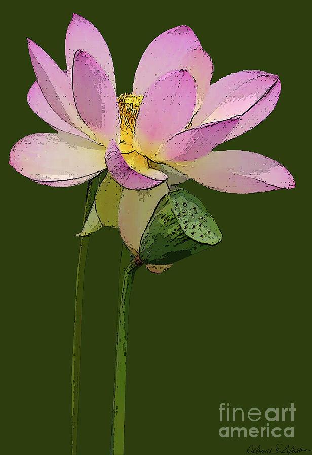 Lotus Blossom by Deborah Eve Alastra