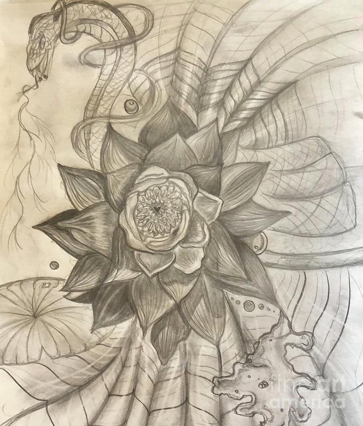 Lotus Flower Bomb Drawing By Kevin Repple
