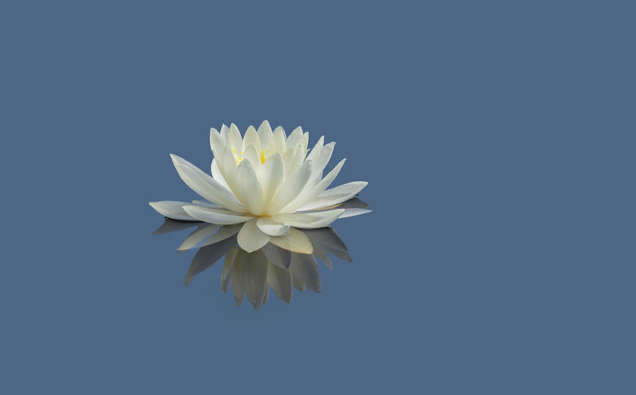 Lotus Flower E by Jim Dollar