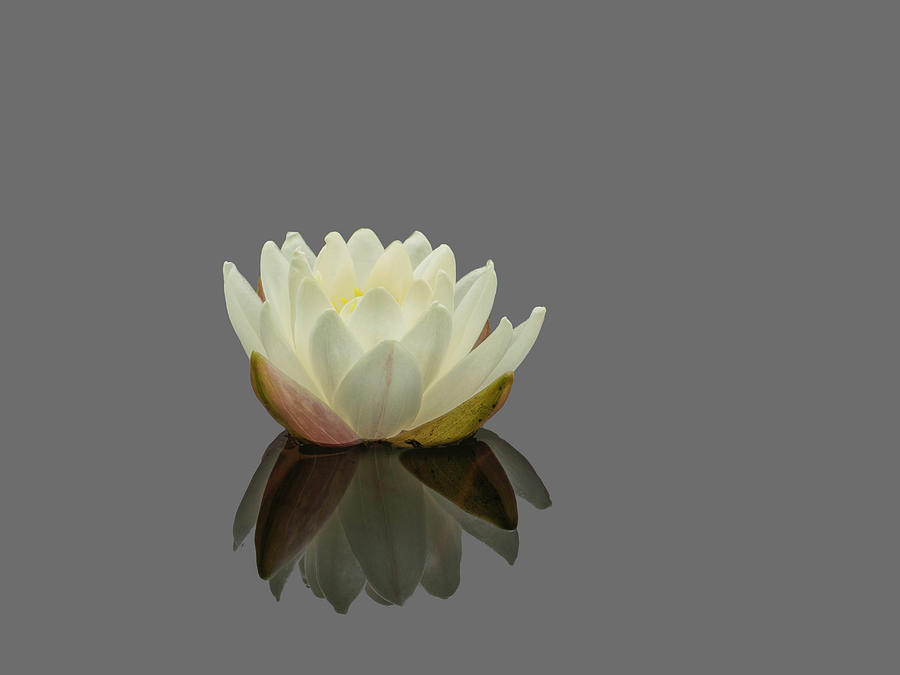 Lotus Flower G by Jim Dollar