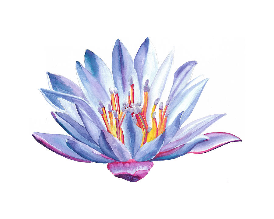 Lotus Watercolor by Brittany Bert Selfe