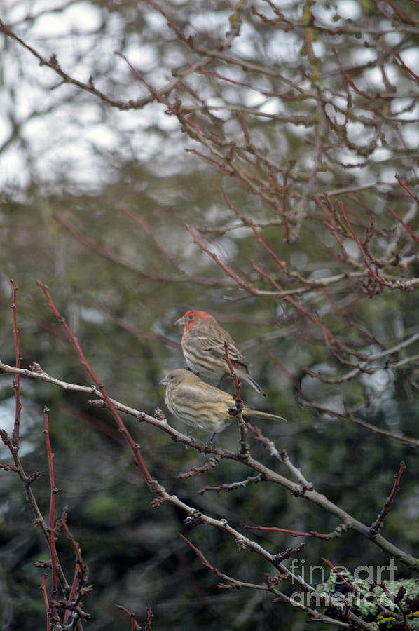 Love Birds by Carol Eliassen