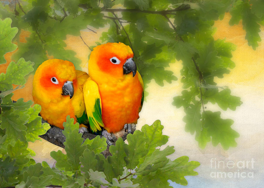 Love Birds by Morag Bates
