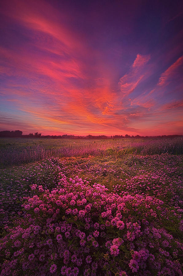 Life Photograph - Love Is All There Is by Phil Koch