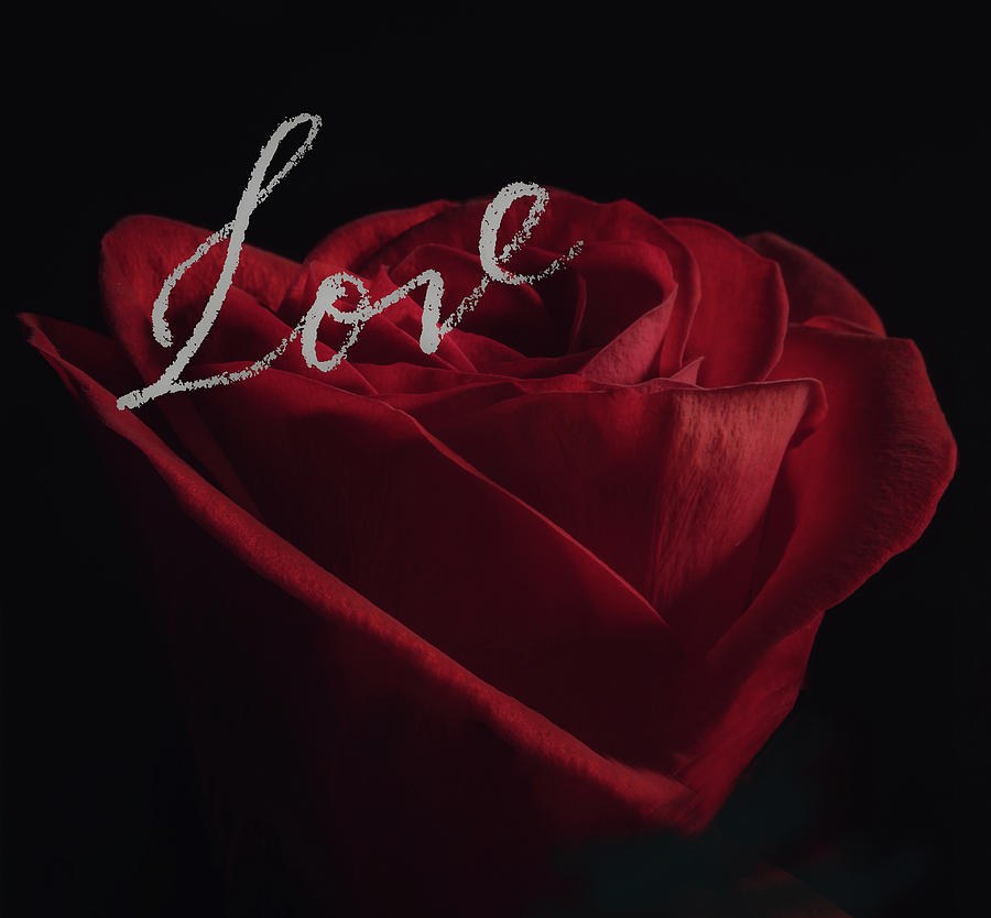 Love Rose by Joni Eskridge