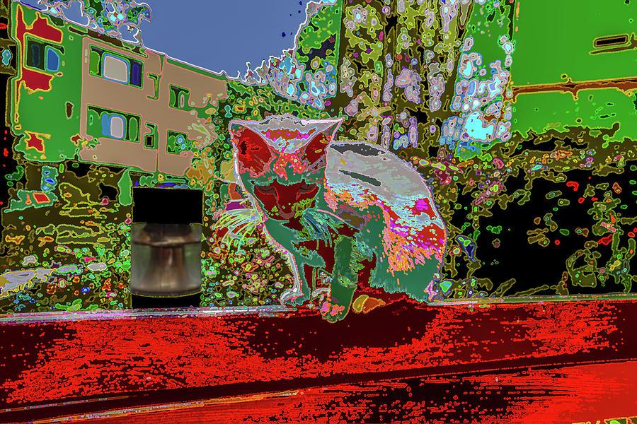 skid row kitten v2 by Kenneth James