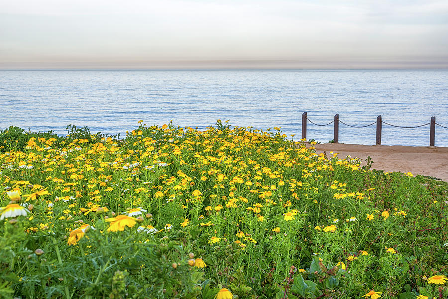 Lovely Bloom At The Cliffs #1 by Joseph S Giacalone
