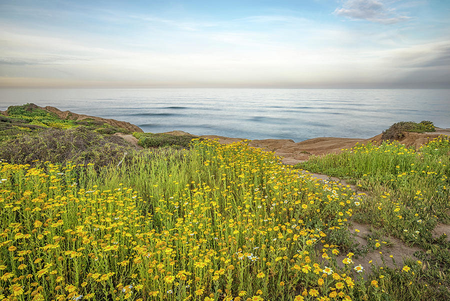 Lovely Bloom At The Cliffs #2 by Joseph S Giacalone