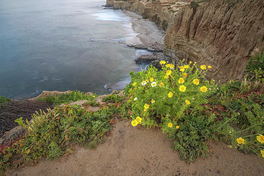 Lovely Bloom At The Cliffs #3 by Joseph S Giacalone