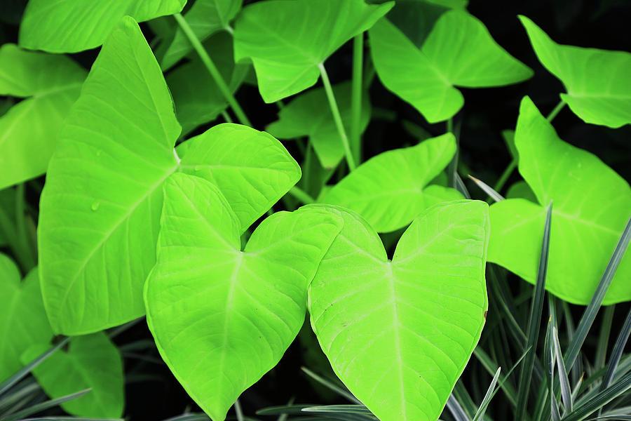 Lovely Green Leaves by Nareeta Martin