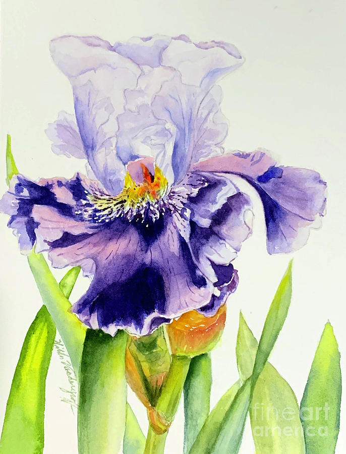 Lovely Iris by Hilda Vandergriff