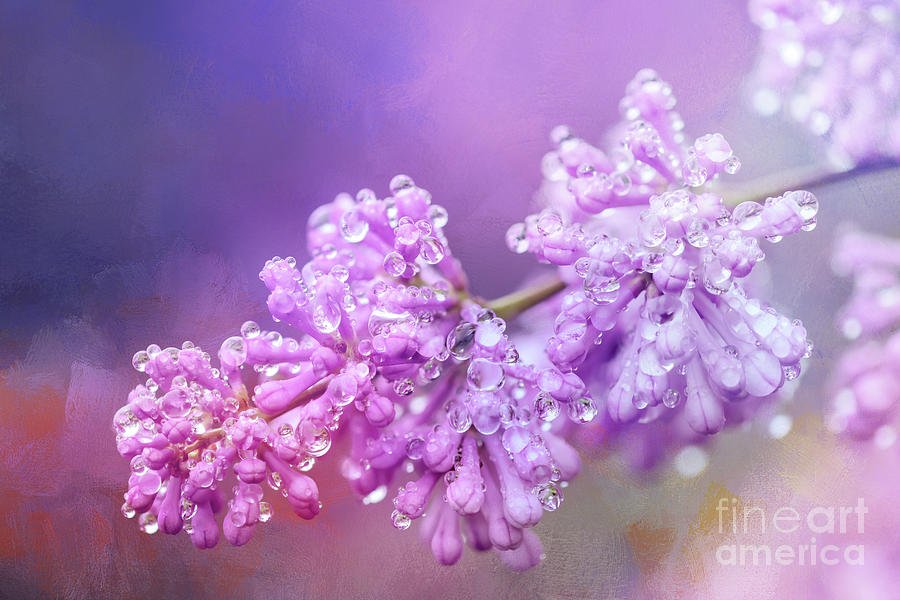 The Magic of Lilacs in the Rain by Anita Pollak