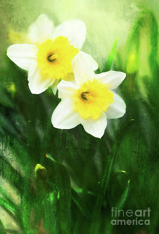 Lovely Painted Daffodil Pair by Anita Pollak