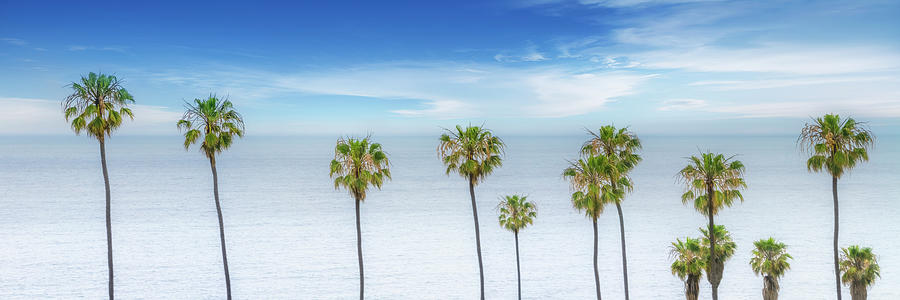 San Diego Photograph - Lovely Palm Trees At The Ocean  by Melanie Viola