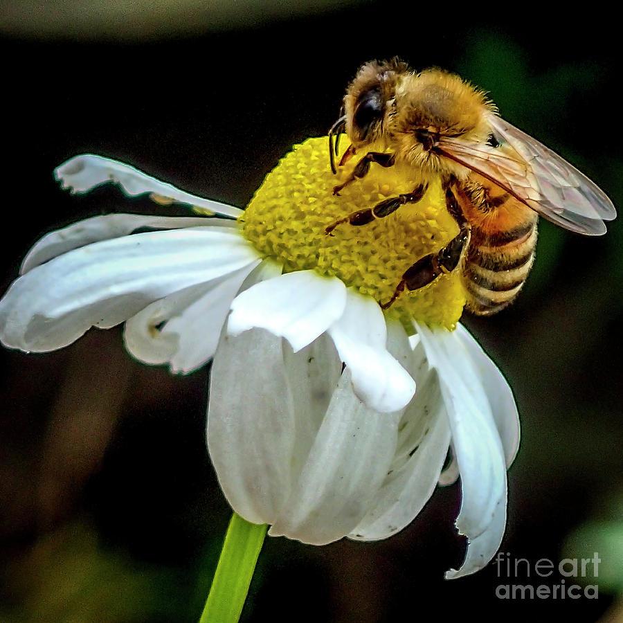 Lovin Chamomile Nectar by Shawn Jeffries