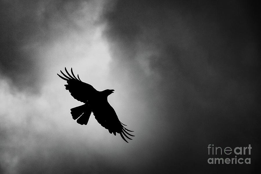 Low Angle View Of Silhouette Bird Photograph by Satoshi Hayashida / Eyeem