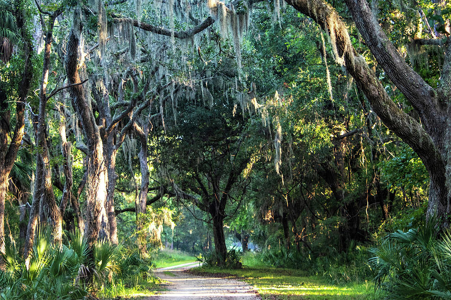 Lowcountry Forest Photograph