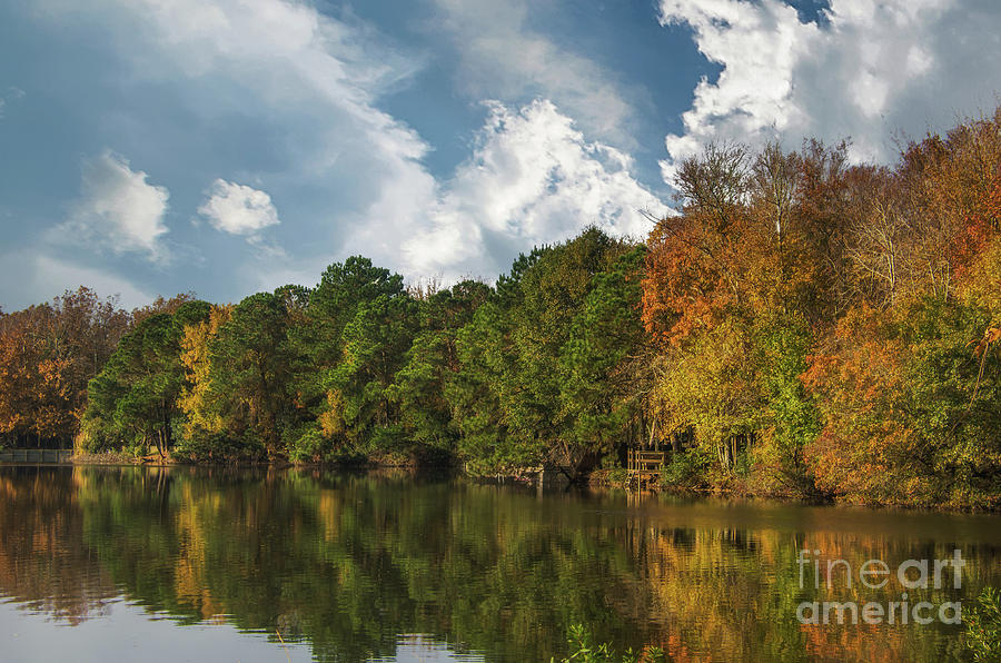 Lowcountry Gold - December 2013 Photograph