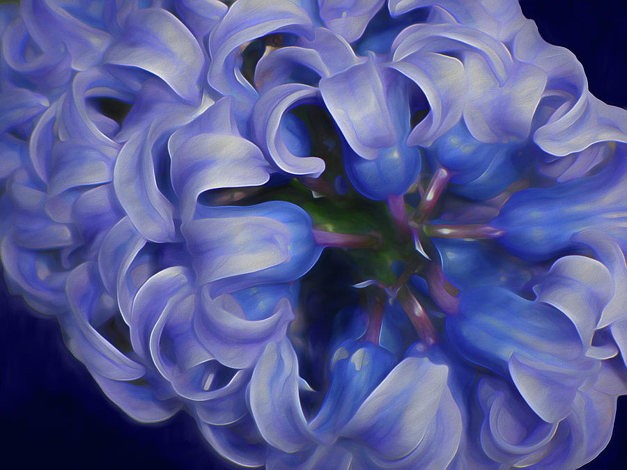 Luminous Curls 2 by Lynda Lehmann