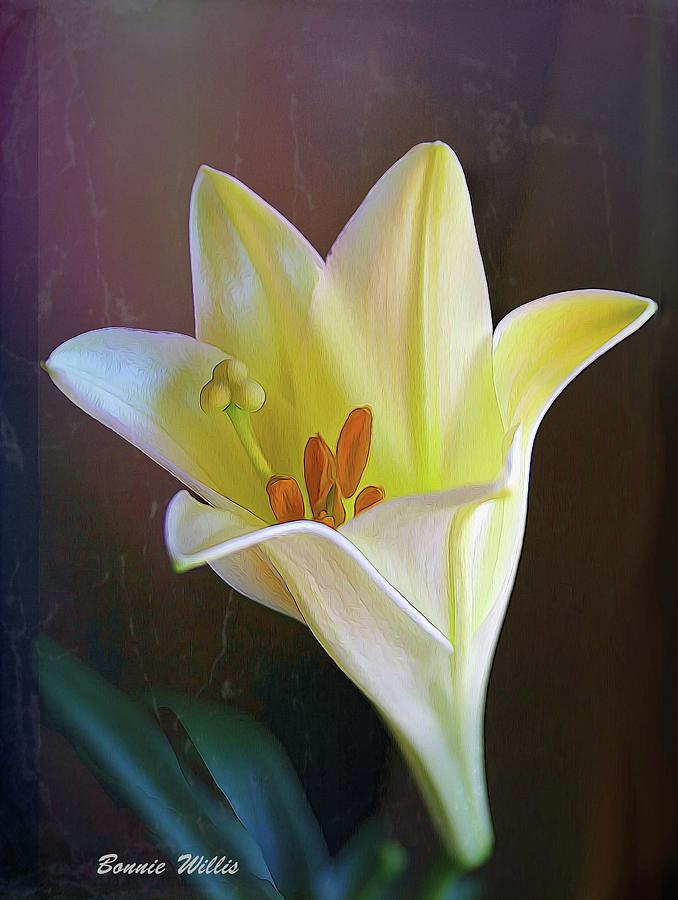 Luscious Lily by Bonnie Willis