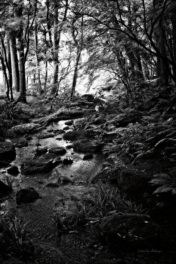 Black And White Painting - Lush Creek In Forest Bw by Debra Van Swearingen