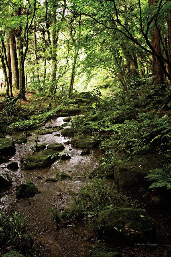 Brooks Painting - Lush Creek In Forest by Debra Van Swearingen