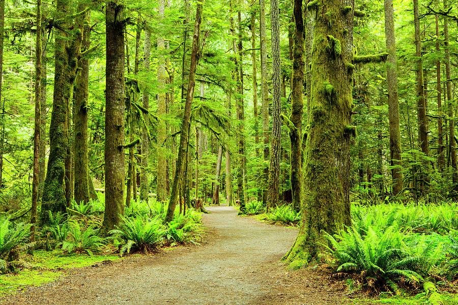 Lush Green Rain Forest Photograph by Jordan Siemens