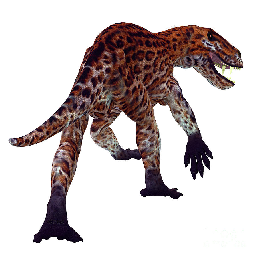 Lycaenops Cat Tail by Corey Ford