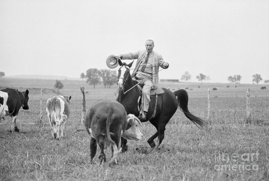 Lyndon Johnson Herding Cattle Photograph by Bettmann