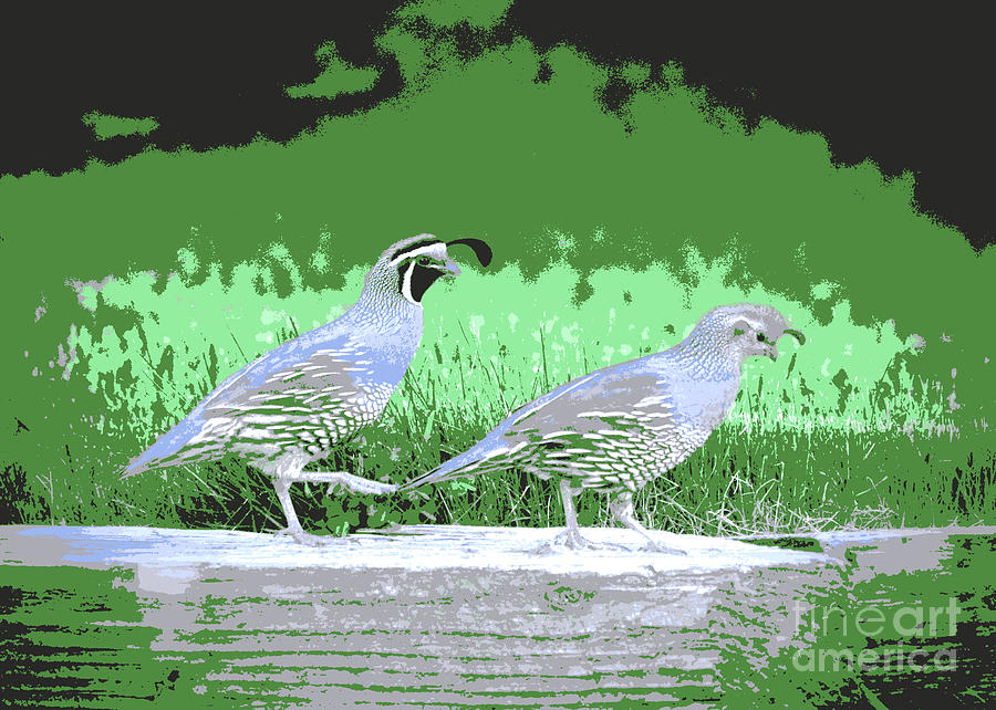 Ma and Pa Quail Digital Art by Carol Groenen