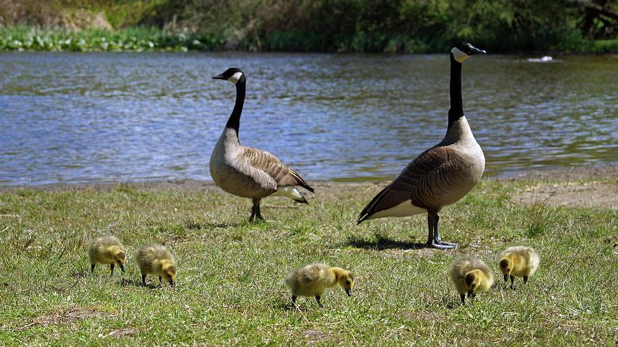 Ma Pa and the Kids by Cameron Wood