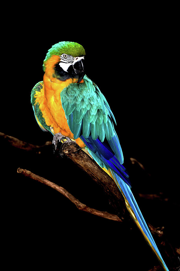 Macaw Photograph - Macaw by David Keith Jr. (all Rights Reserved)