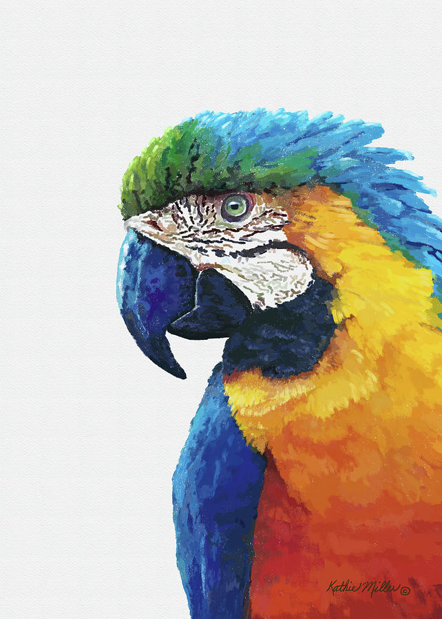 Macaw by Kathie Miller