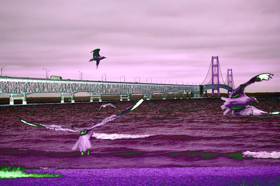 Mackinac Bridge Seagulls Photograph