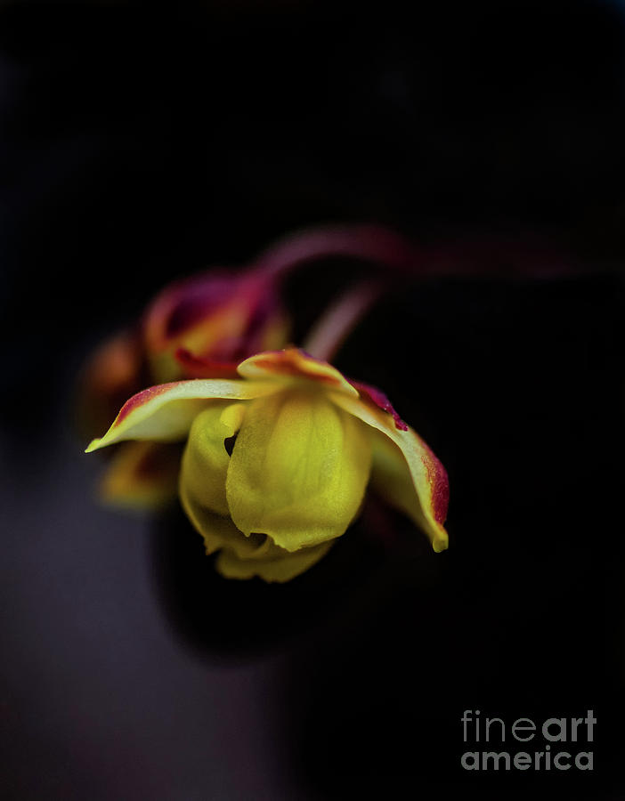 Macro Beauty by Susan Warren