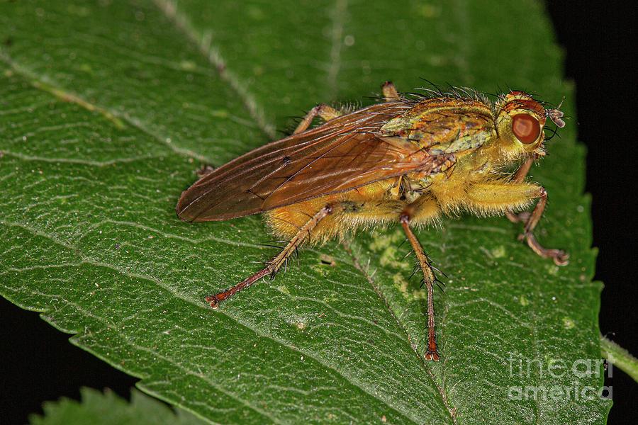 Macro Fly by Brian Roscorla